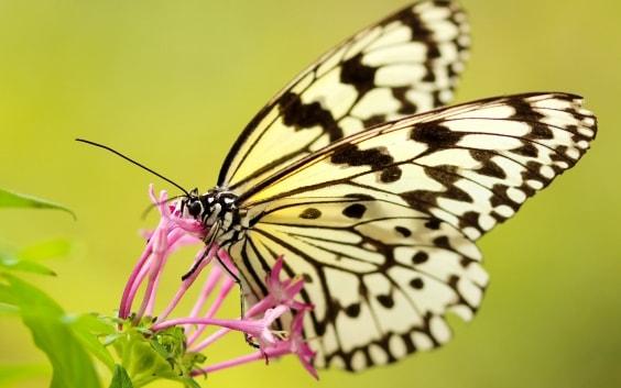 Butterfly garden design Ottawa