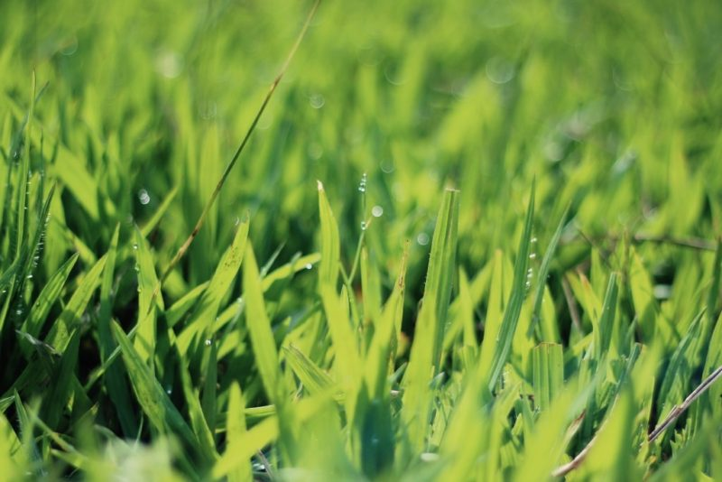 Lawn rejuvenation and lawn repair Ottawa