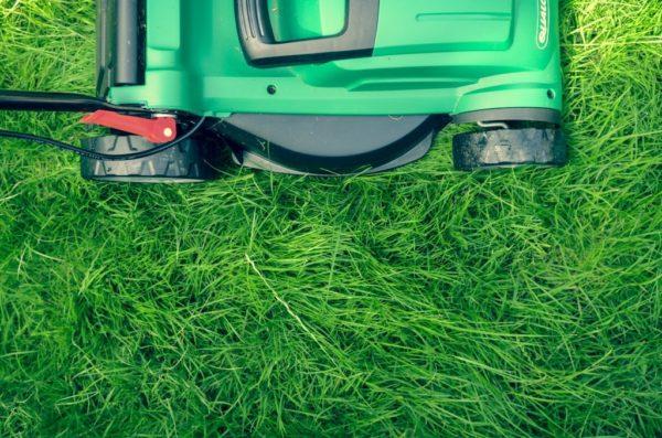 lawn repair and maintenance