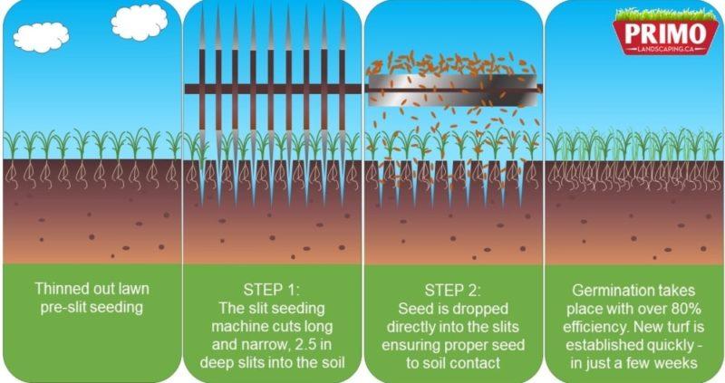 Ottawa Slit Seeding lawn rejuvenation and lawn repair