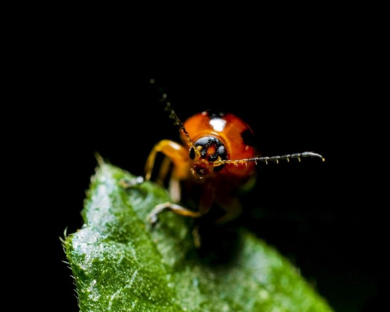 Organic insect and disease treatments
