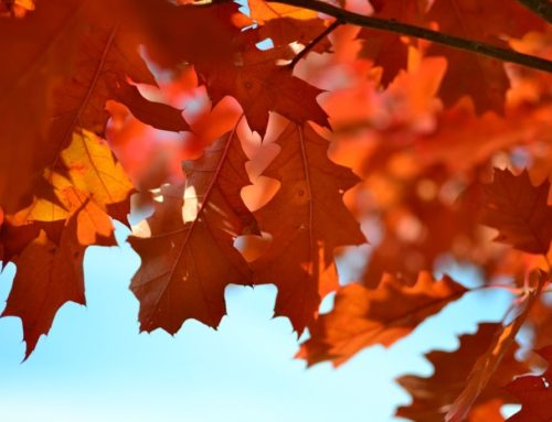 Fall cleanup in Ottawa