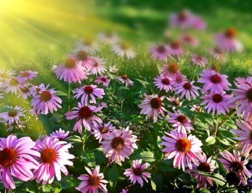 Nouveaux services de jardinage et d'entretien paysager offerts par Primo Landscaping à Ottawa.